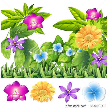 Colorful flowers in tropical garden 33863049
