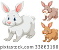Rabbits with three different colors 33863198