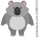 white, round, koala 33863231