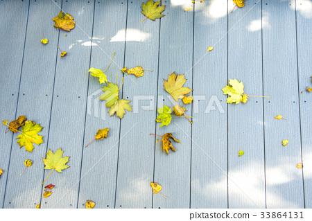 foliage, leaf, leaves of tree 33864131