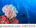 珊瑚 海洋 海浪 33872555