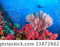 珊瑚 海洋 海浪 33872662