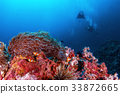 珊瑚 海洋 海浪 33872665