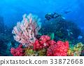珊瑚 海洋 海浪 33872668