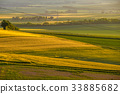 พื้นหญ้า,ทุ่งนา,นา 33885682