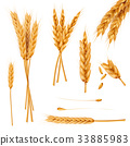 Wheat ears and seeds realistic vectors collection 33885983