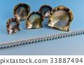 珍珠母 33887494