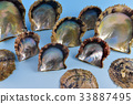 珍珠貝殼 33887495