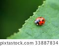 무당 벌레 잎 녹색 33887834