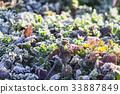 ฤดูหนาว,หญ้า,ดอกไม้ 33887849