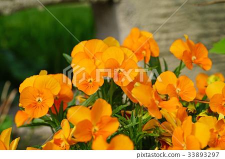 花朵 花卉 花 33893297