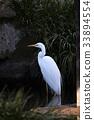 鸟儿 鸟 野生鸟类 33894554