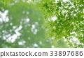 foliage, leaf, leafs 33897686