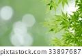 foliage, leaf, leafs 33897687