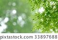 foliage, leaf, leafs 33897688