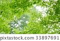 environment, ecology, ecosystem 33897691