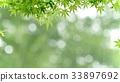environment, ecology, ecosystem 33897692