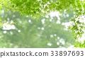 foliage, leaf, leafs 33897693