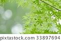 foliage, leaf, leafs 33897694