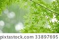 foliage, leaf, leafs 33897695