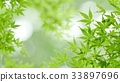 foliage, leaf, leafs 33897696