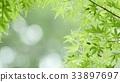 foliage, leaf, leafs 33897697