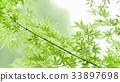 environment, ecology, ecosystem 33897698