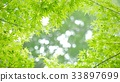 foliage, leaf, leafs 33897699