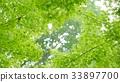 foliage, leaf, leafs 33897700