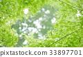 environment, ecology, ecosystem 33897701