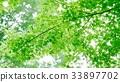 environment, ecology, ecosystem 33897702