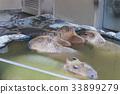 포유류, 동물원, 탄산 33899279