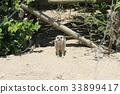 포유류, 동물원, 시선 33899417