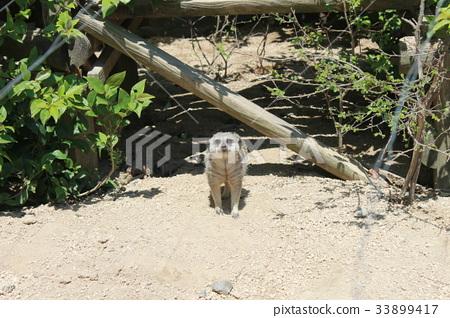 สัตว์,ภาพวาดมือ สัตว์,สวนสัตว์ 33899417