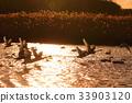 一隻天鵝在夕陽下飛走 33903120