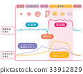 基礎體溫表基礎體溫女性荷爾蒙 33912829