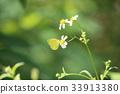 蝴蝶 黄蝶 虫子 33913380