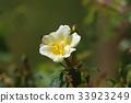 bloom, blossom, blossoms 33923249