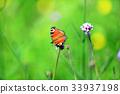 peacock, butterfly, butterflies 33937198