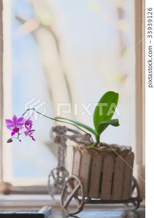 Window ornament 33939126