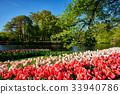Blooming tulips flowerbeds in Keukenhof flower 33940786