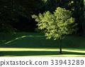 ไม้,โรงงาน,ต้นไม้ 33943289
