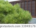 잎, 푸른, 아오바 33949176