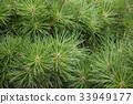잎, 푸른, 아오바 33949177