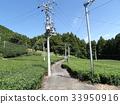 tea, blue sky, tea plantations 33950916