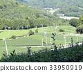 tea, tea plantations, tea plantation 33950919