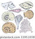 shell, ocean, sea 33951038