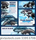 动物 海洋 矢量 33953706
