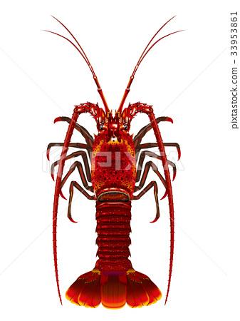 大螯虾 甲壳动物 对虾 33953861