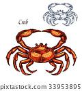 螃蟹 蟹 動物 33953895